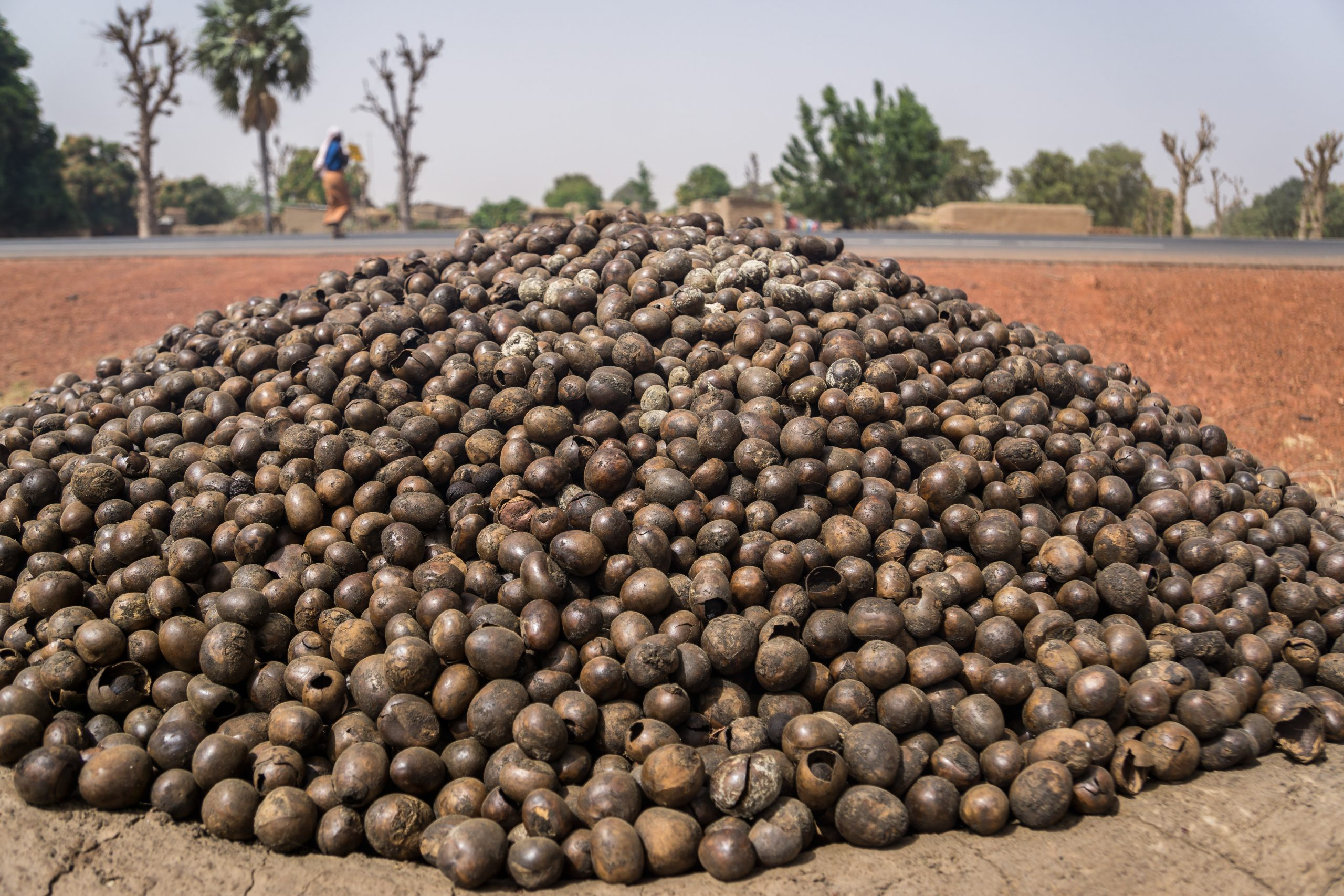 Pile of shea nuts being roasted